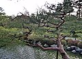 平安神宮神苑 Gardens of Heian Shrine - panoramio (1).jpg