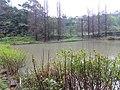 擔水窩濕地農場 Danshuiwo Wetland Farm - panoramio.jpg