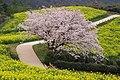 白木峰高原 - panoramio.jpg