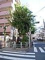 縁切榎 - panoramio.jpg