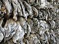 苏兆征故居的蚝壳墙.jpg