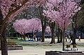 錦町公園 Nishiki-cho Park - panoramio.jpg