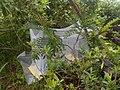 -Mosquito net-.jpg