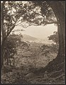-View from Hillside Toward City and Harbor, possibly Hong Kong- MET DP136232.jpg