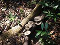 ... mushroom (16021544037).jpg