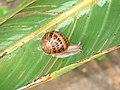 01a-garden-snail.JPG