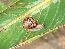 List of invasive speci...
