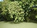 0243Views of Sipat irrigation canals 40.jpg