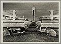 1108WP-4 - Abattoirs et marché aux bestiaux de la Mouche - Tony Garnier 1.jpg