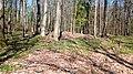 11 Grabhügelgruppe im Waldstück Hainbach.jpg