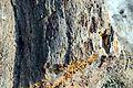 14-224-5002 2 Олексієво-Дружківка.jpg