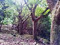 1 Vallee Ferney indigenous forest a.jpg