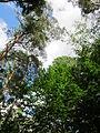 20130731Speyrer Wald22.jpg
