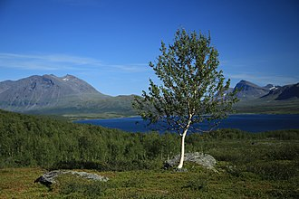 Nordkalottruta - Image: 2014 08 02 Nordkalottleden, Sweden 6387