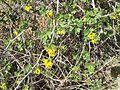 2015-03-16 14 15 20 Flowering bush at the Northeastern Nevada Museum in Elko, Nevada.JPG