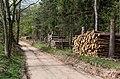 2015 Droga leśna na Wapniarkę.jpg