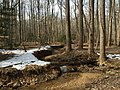 2016-02-08 11 54 51 View down a tributary of Difficult Run from the Gerry Connolly Cross County Trail between Miller Heights Road and Vale Road in Oakton, Fairfax County, Virginia.jpg