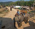 2016-04-08 Elephant Safari Krabi 09.jpg