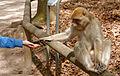 2016-04-21 14-22-24 montagne-des-singes.jpg