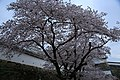 20160403 Himeji-Castle 3282 (26553345280).jpg