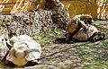 2018 04 ZooEberswalde Riesenschildkröten IMG 1190.JPG