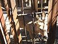 21 Мини-зоопарк в п. Листвянка.jpg