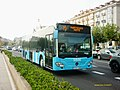 3446 ALSA - Flickr - antoniovera1.jpg