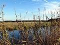 35 Bennetts Point RD Green Pond SC 6863 (12397812183).jpg