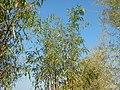 43Lubao Bamboo Hub & Eco-Park Santa Catalina Pampanga 31.jpg