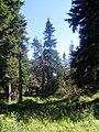543 51 Špindlerův Mlýn, Czech Republic - panoramio (2).jpg