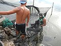5798Isla Babatnin Malolos Bulacan Harvesting Fishes 29.jpg