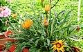 A@a Kyproulas garden askas32 Cyprus - panoramio.jpg