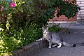 A cat on Kanonerskiy island-2015-08-23.jpg