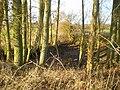 A former pond SW of Sheriffhales - geograph.org.uk - 1640654.jpg