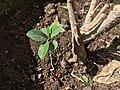 A newly born plant.jpg