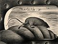A rat leaving a ship via the mooring rope, thus spreading th Wellcome V0010685.jpg