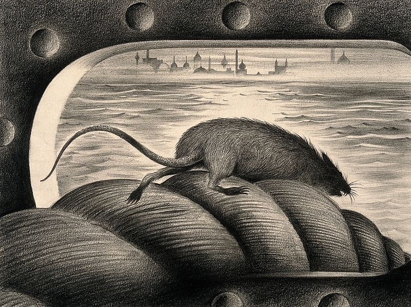 File:A rat leaving a ship via the mooring rope, thus spreading th Wellcome V0010685.jpg
