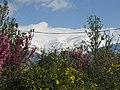 Abbasabad, Tehran, Tehran, Iran - panoramio - Behrooz Rezvani (21).jpg
