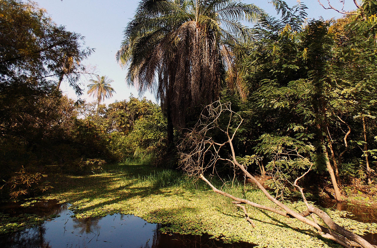 file abuko nature reserve  gambia - december 2013 jpg