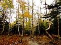 Acadia National Park (8111141310).jpg