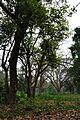 Acharya Jagadish Chandra Bose Indian Botanic Garden - Howrah 2011-02-20 1527.JPG
