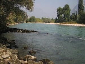Salmo marmoratus - Adige river in Vallagarina