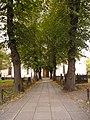 Adolf Fredriks kyrka-043.jpg