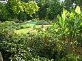 African Garden, Horniman Gardens - geograph.org.uk - 203737.jpg