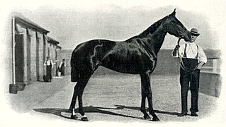 Aida (horse) British-bred Thoroughbred racehorse