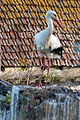 Algarve - Silves - stork attempting to build a nest (25202775823).jpg