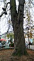 Amiens, square Saint-Denis 4.jpg