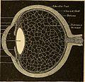 Anatomy, physiology and hygiene (1890) (14784328403).jpg