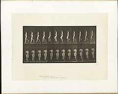 Animal locomotion. Plate 128 (Boston Public Library).jpg