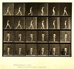 Animal locomotion. Plate 20 (Boston Public Library).jpg